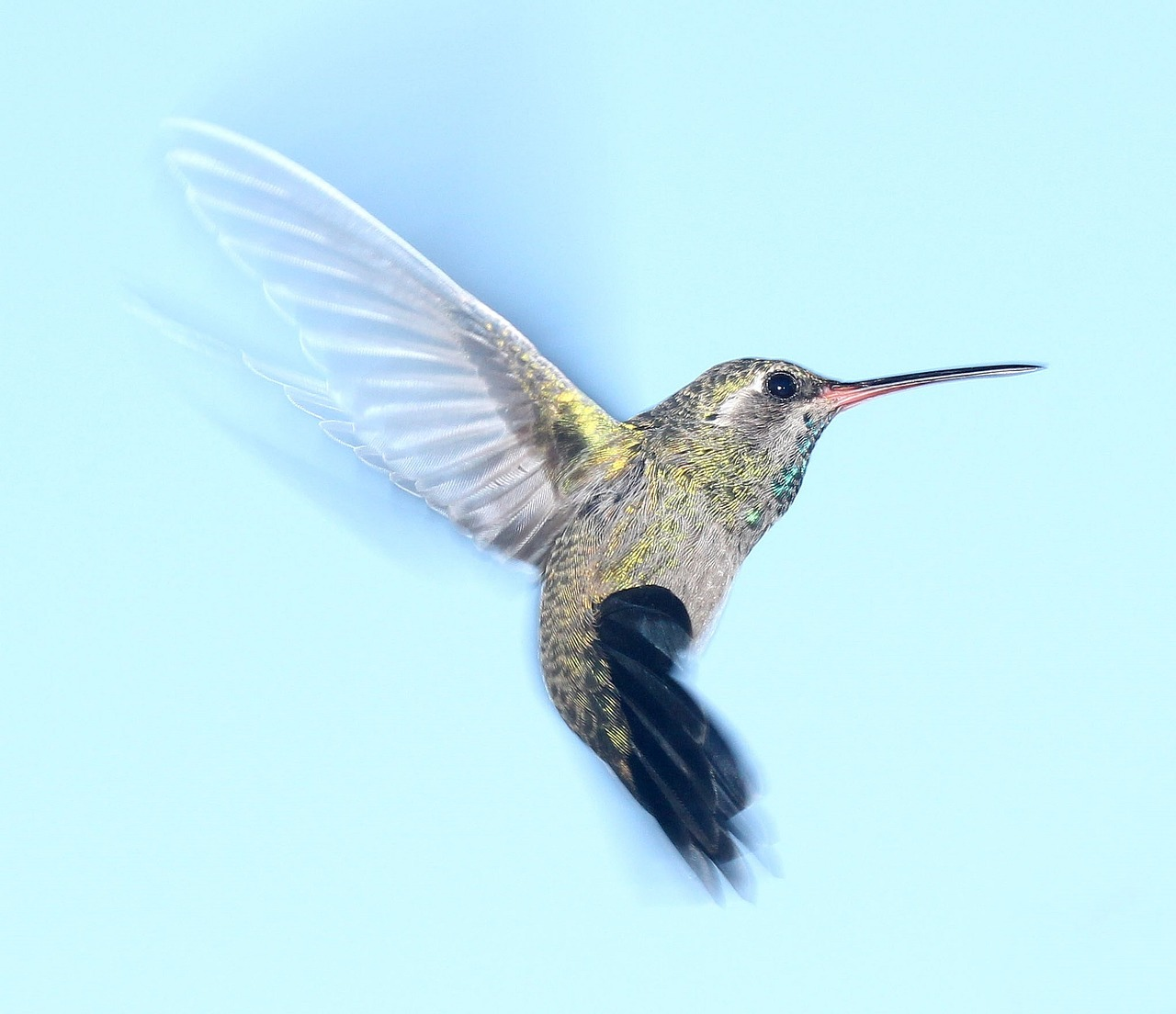 hummingbird-1047836_1280